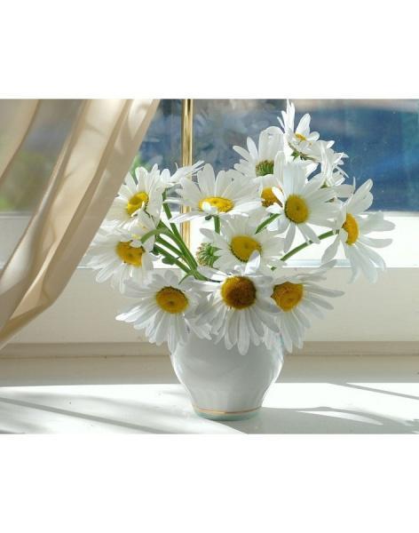 Заказ цветов ромашка купить тюльпаны голландские в спб