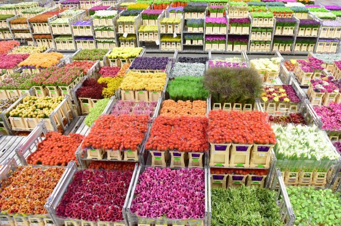 Где можно оптом купить цветы