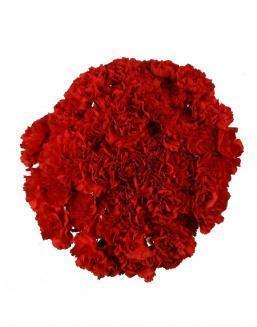Bouquet of 51 red dianthus | Carnations,lilies