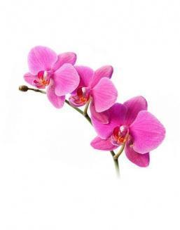 Bouquet of an orchid pink | Flowers for Wedding flowers