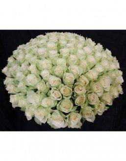 Bouquet of 101 white holland roses | White roses