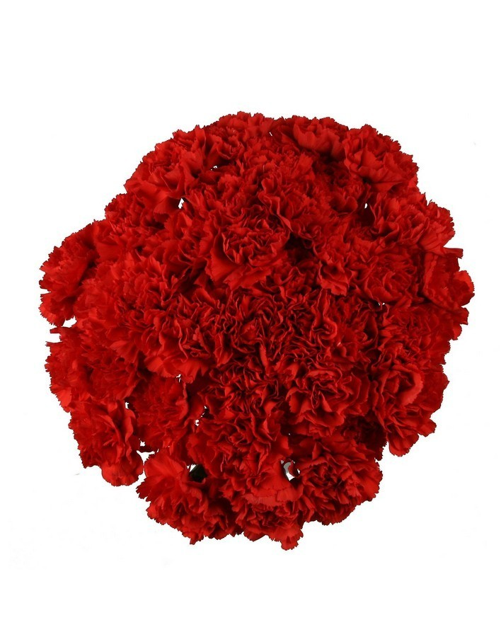 Bouquet of 51 red dianthus